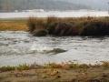 estuary-spawners